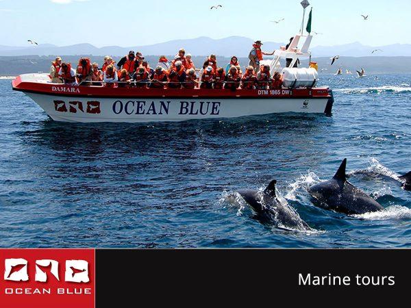 Ocean Blue Adventures - Marine Tours