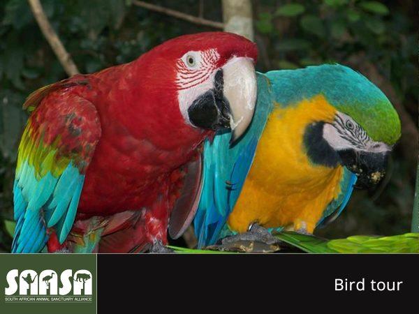 saasa - birds